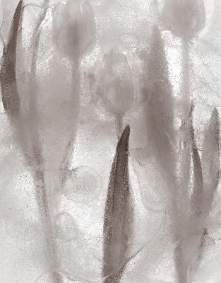 ice-form-tulips