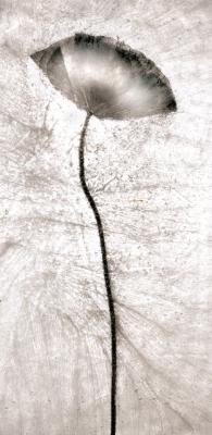 iceform-poppy