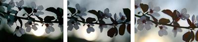 plum_blossoms-triptych